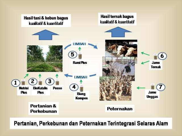 Pertanian dan Peternakan Terintegrasi Selaras Alam